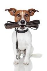hunde træning