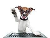 Tilmelding hundetræning