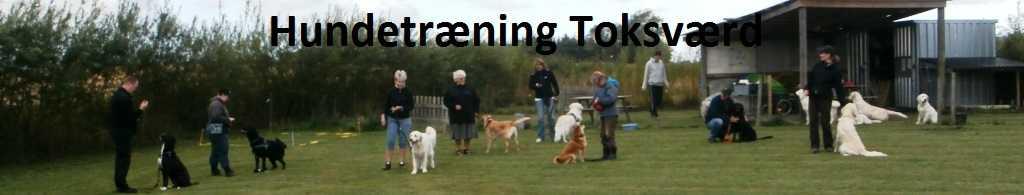 Hunde træning for alle hunde