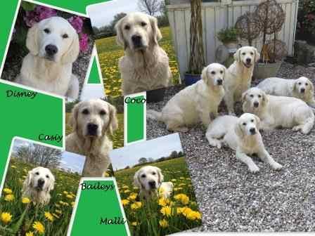 Hundetræning for alle hunde